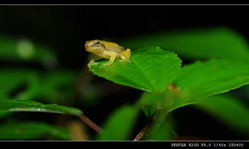 最近流行拍青蛙!!